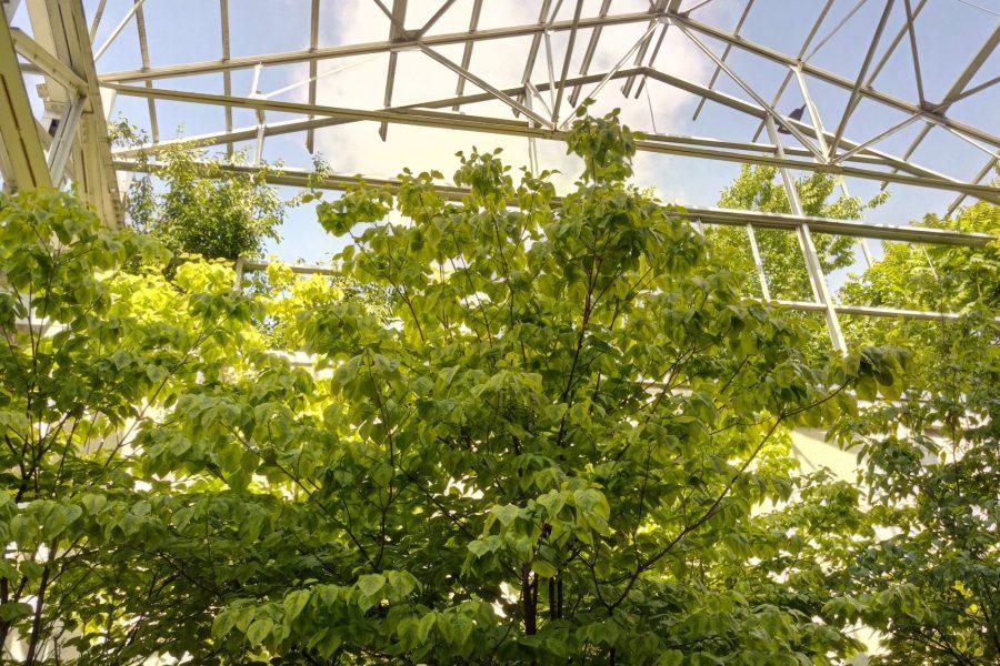 chiome verdi verso il cielo sotto struttura metallica