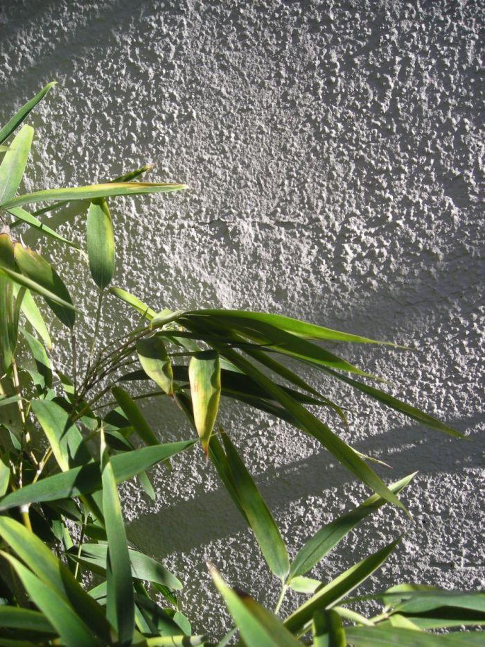 cortile privato con jacuzzi fra bambù e rampicanti a milano_2
