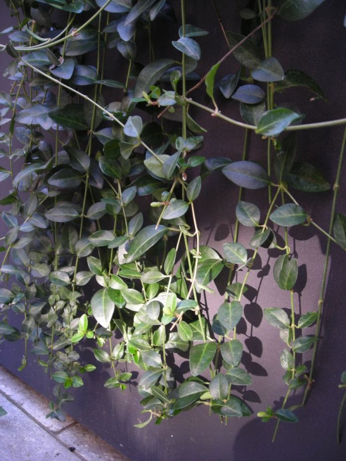 cortile privato con jacuzzi fra bambù e rampicanti a milano_5