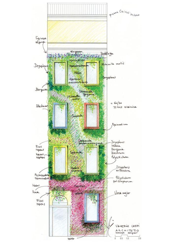 disegno a mano plant design per parete verde