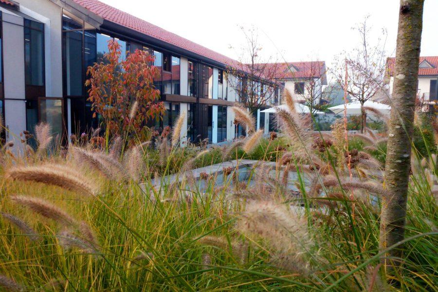 steli e spighe di graminacee colorano il cortile del campus spark di bereguardo
